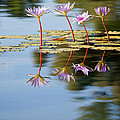 Purple Lillies by Peter Tellone
