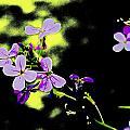 Purple Magic by Jill DeSousa
