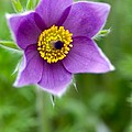 Purple Majesty by Venetta Archer