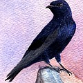 Purple Martin by Lynn Quinn