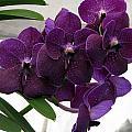 Purple Me Not by Debi Singer