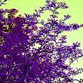 Purple Morning by Alys Caviness-Gober