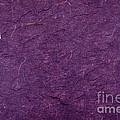Purple Mulberry Paper  by Jim Pruitt