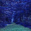 Purple Nature by Tina Baxter