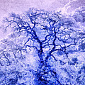 Purple Oak Tree Dream  by Priya Ghose