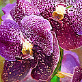 Purple Orchid by Deborah Hughes