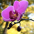 Purple Orchid In September Sun by Neal Eslinger