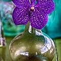 Purple Orchid In Vase by Jade Moon