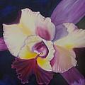 Purple Orchid by Jenny Lee