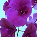 Purple Orchids 3 by Mary Deal