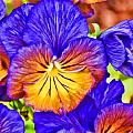 Purple Pansies Stylized by Jeanne May