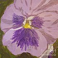 Purple Pansy 1 by Vicki Maheu