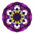 Purple Pansy II Flower Mandala White by David J Bookbinder