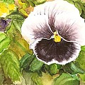 Purple Pansy by Laurie Adams