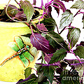 Purple Passion And Dragonfly Pot by Barbara Griffin