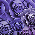 Purple Passion Rose Flower Abstract by Jennie Marie Schell