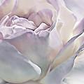 Purple Passion Pastel Rose Flower by Jennie Marie Schell