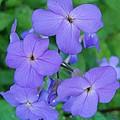 Purple Passion by Sara  Raber