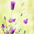 Purple Passion Texture by Bonfire Photography