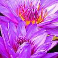Purple Perfection by Putterhug  Studio