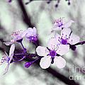 Purple Pink Blossoms by Debra Thompson