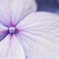 Purple Pinwheel Flower by Sammy Miller