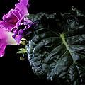 Purple Plant by Photophilous