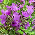 Purple Popping 2 by Cedric Hampton