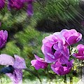 Purple Poppy by PM Staab