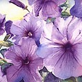 Purple Profusion by Patricia Henderson