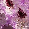 Purple Rhodo by Brigitte Mueller