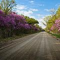 Purple Road by Eric Benjamin
