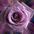 Purple Rose by Thomas Woolworth