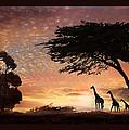 Purple Safari Sunset by Melinda Hughes-Berland
