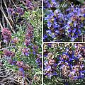 Purple Sage Collage by Carol Groenen