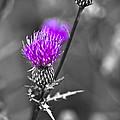 Purple by Samantha Eisenhauer