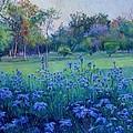 Purple Season by Abid Khan