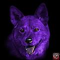 Purple Shiba Inu Dog Art - 8555 - Bb by James Ahn