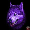 Purple Siberian Husky Dog Art - 6062 - Bb by James Ahn