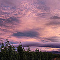 Purple Skies Over Georges Michel Wine Estate by Andrei SKY