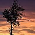 Purple Sky by Colette Panaioti