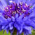 Purple Spike by Ben Baucum