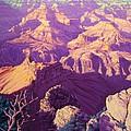 Purple Splendor by Cheryl Fecht