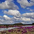 Purple Spring by Cathy Mahnke