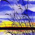Purple Sunset by Brenda Owen