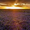 Purple Sunset by Teri Virbickis