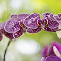 Purple by Theodore Jones