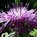 Purple Thistle by Christine Stack