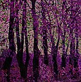 Purple Trees by Carol Lynch