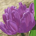 Purple Tulip by Michelle Moroz-Chymy